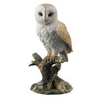 Veronese Barn Owl Standing on a Branch