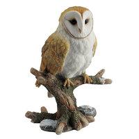 Veronese Barn Owl Perching on Branch