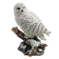 Veronese Snow Owl Perching on a Branch